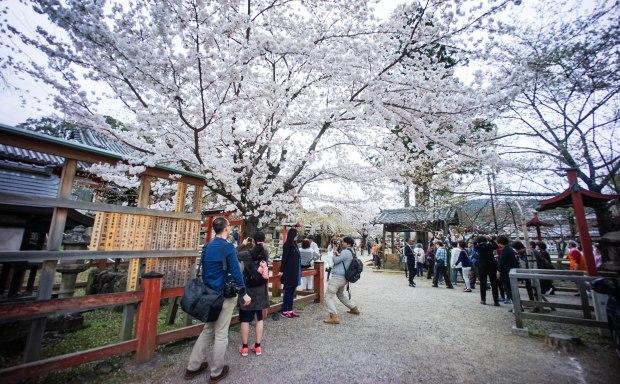 Himuro Shrine 氷室神社