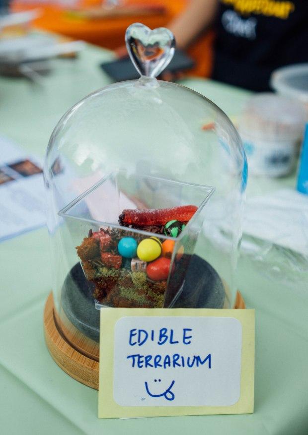 artbox_edibleterrarium2