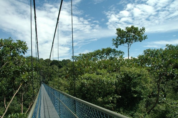 5-snubbed-travel-wonders-in-singapore-hsbc-treetop-walk