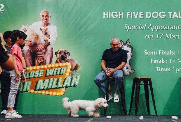 high-five-dog-talent-competition-caesar-millan